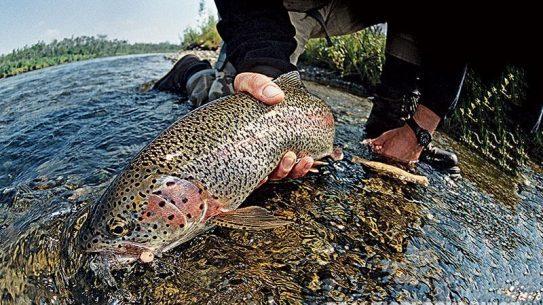 fish, survival fishing