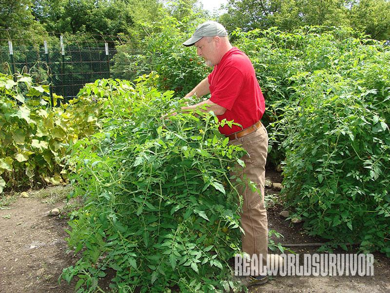 common gardening mistakes