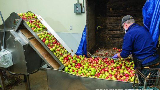 Apples Being Washed