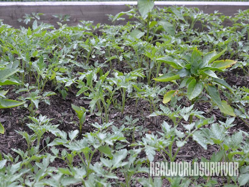 Ammending Soil