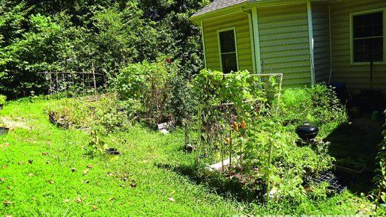 Angela's Garden