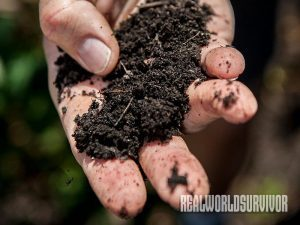 Soil-Building Plant