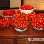 Common gardening mistakes when growing tomatoes