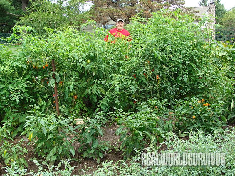 vegetable pruning common gardening mistakes
