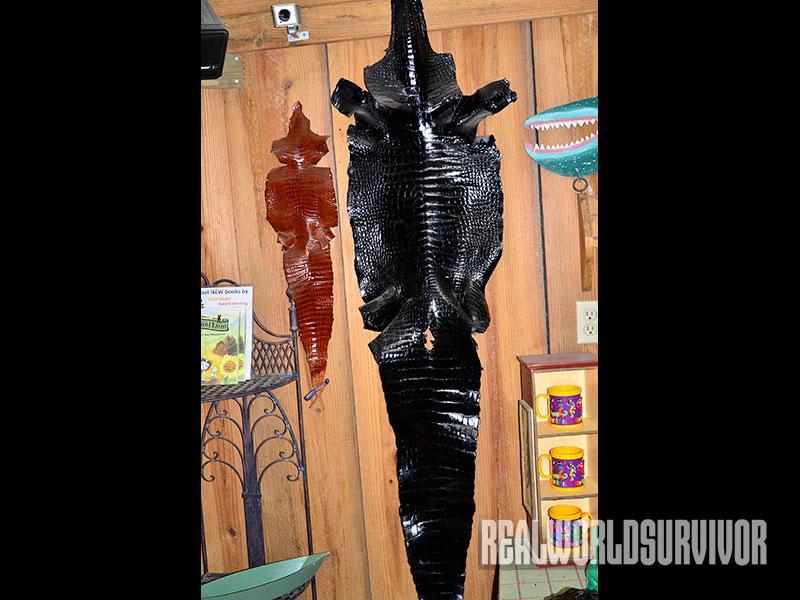 Alligator skins