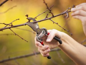 Fruit Trees, trees, fruit, fruit trees planting