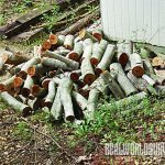 Bill_and_Diane's_Woodpile