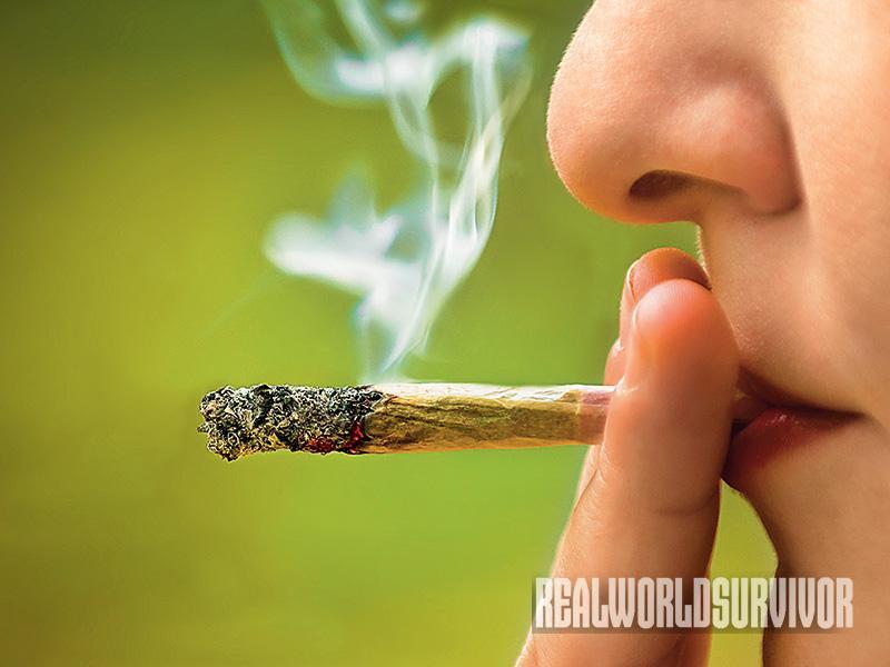 Drug Addiction SEDGE Summer 2015 marijuana