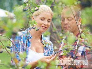 aronia berry/ chokeberry health benefits