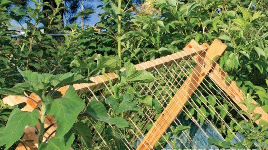 gardening, DIY, trellis