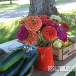 homestead farm, farming, farmstand
