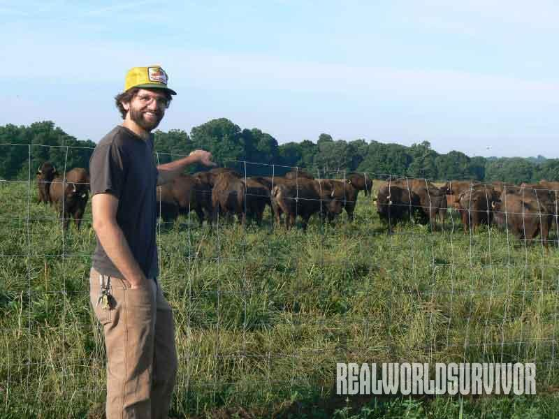 Woodland Farm, herds