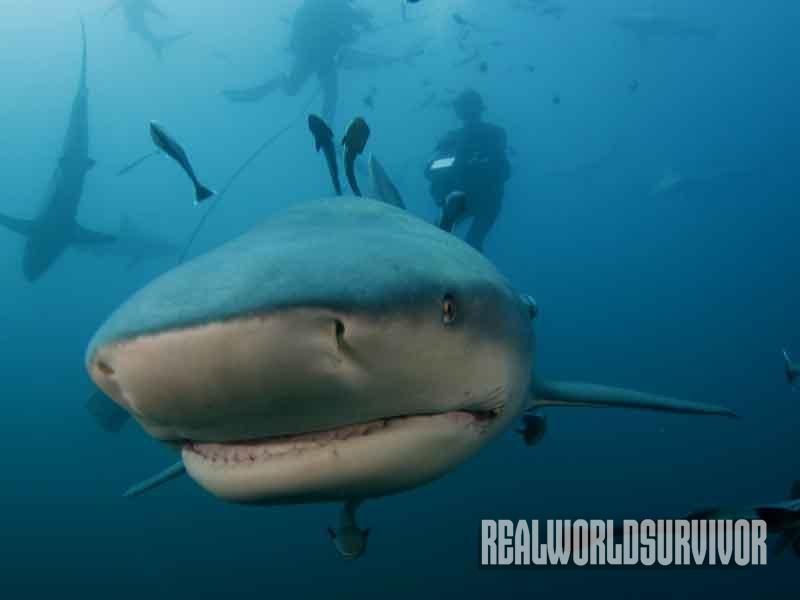 sharks, diving
