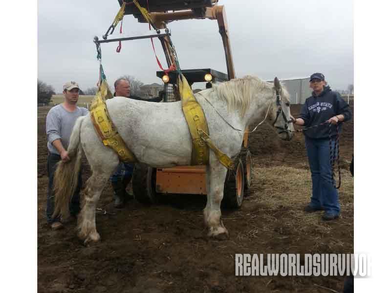 rescue, animal, horse