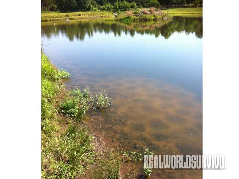 fishing heaven, farm pond