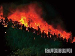wild fire, forest