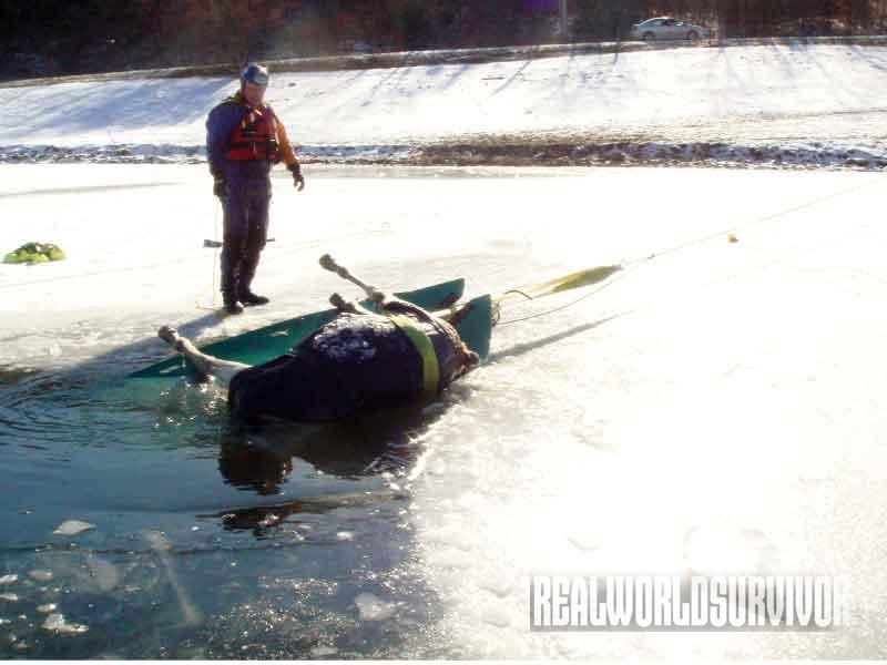 animal, ice, rescue