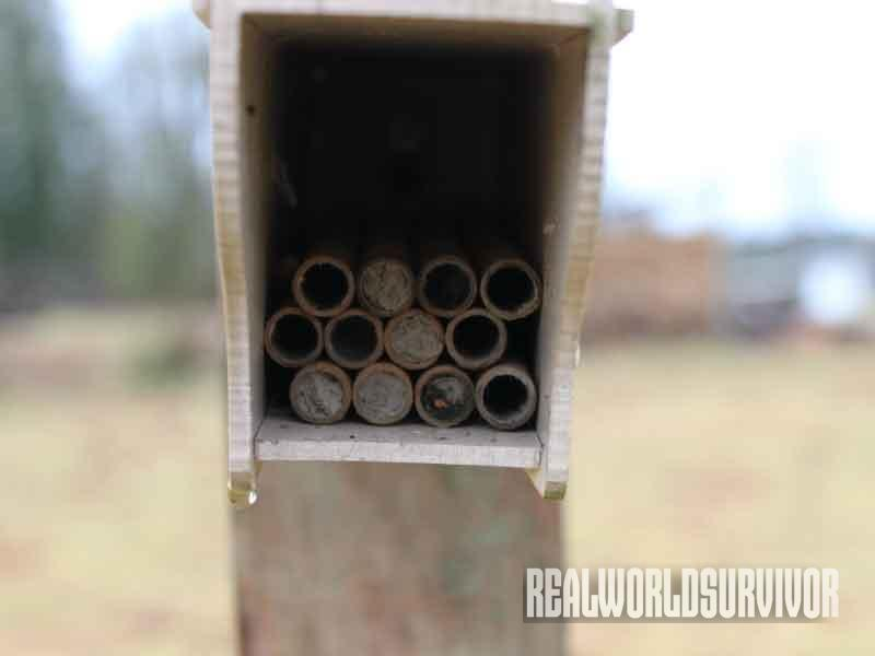 filled nest, mason bee