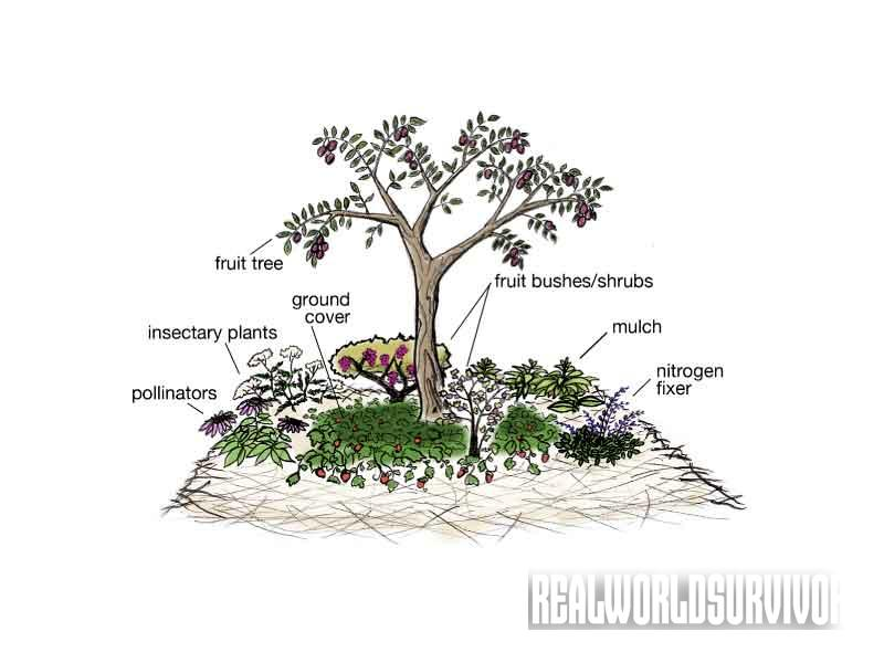 food forest, anatomy