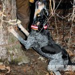 COON HOUND, COON, DOG, DOGS, DOG TRAINING, coon hound action