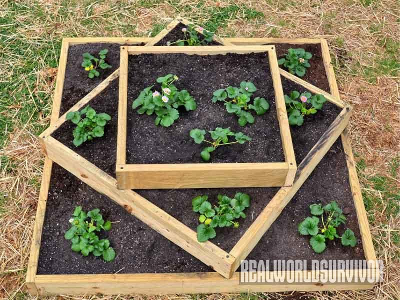 Diy How To Build A Sturdy Three Tiered Raised Garden Box
