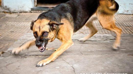 animal attack, animal attacks, animal bite, animal bites, dog bite, dog bites, dog attack main