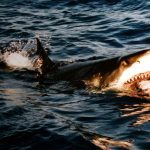 shark week 2015, shark attack, shark attacks, shark attack survival tips, shark attack tips, shark attack survival, shark week
