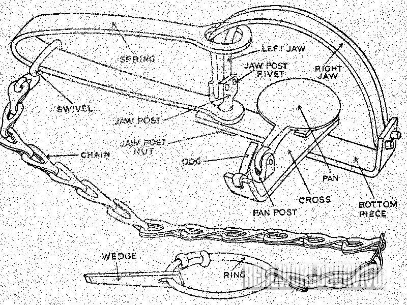 Various parts of the common leg-hold trap.