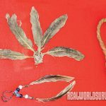Native Americans used feathers to create jewelry.