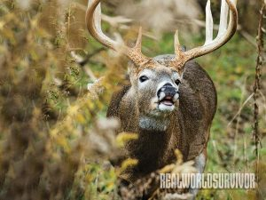 Mask your natural scent easily to prepare for deer hunting.