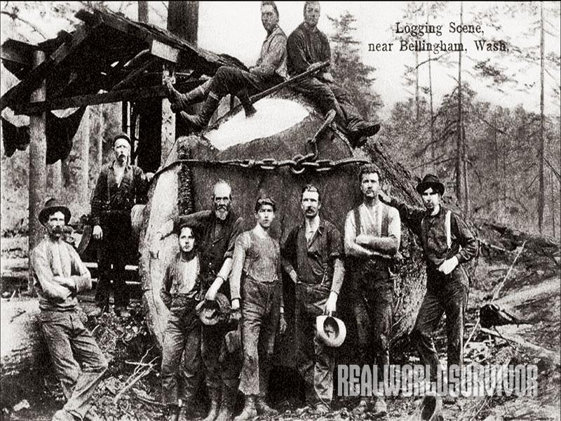Logging scene near Belingham, Wash.