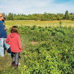 New Pioneer fall 2015 Homestead Diet garden