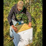 New Pioneer fall 2015 Homestead Diet honey