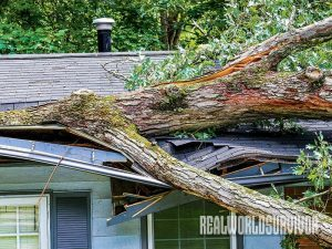 Thunderstorms account for lots of damage and loss of life.