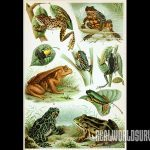 Different types of frogs.