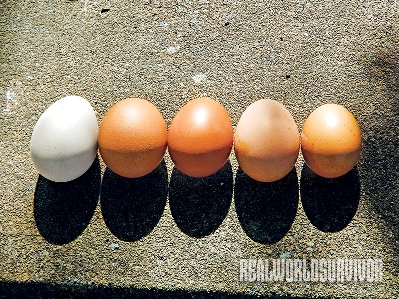 Chicken eggs come in various colors.