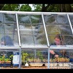 Students get to make great use of the Wildcat Ranch greenhouse.