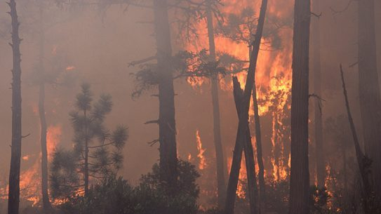 The American Red Cross is helping families affected by the wildfire season.