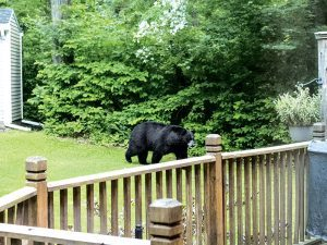Have a secure fence to keep bears out of your garden.