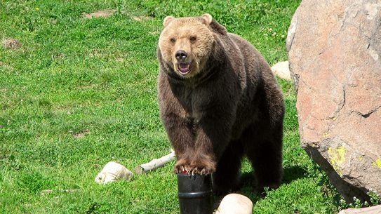 Bear with bear canister