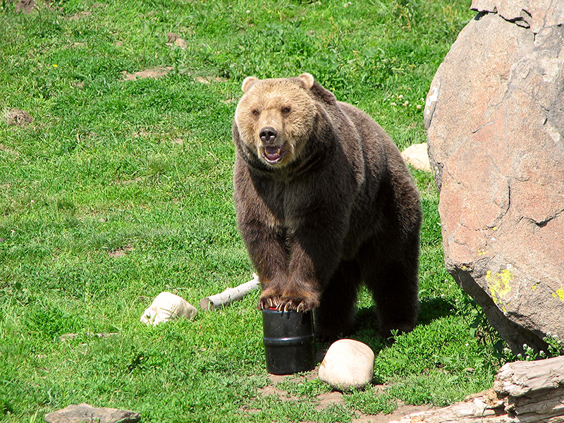 Image result for black bear bear canister
