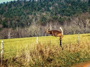 To keep deer out of your garden, install a fence that is at least 8 feet tall.