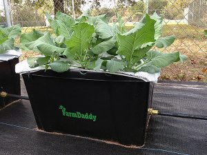 Farm Daddy Self-Watering Garden Container for preppers