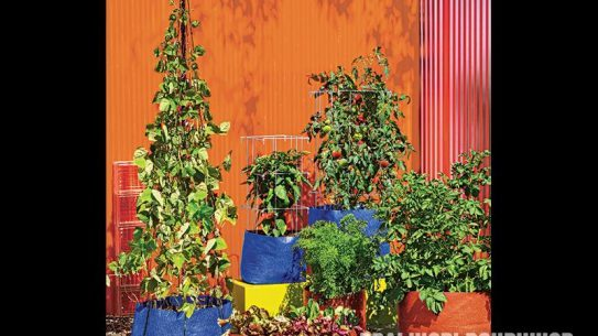 Grow Bags are available in a number of shapes and sizes.