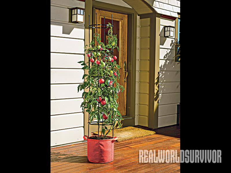 There are even Grow Bag specific to tomato plants.