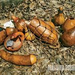 gourd containers