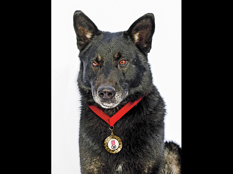 Sako helped keep his owner warm, safe and supplied with drinking water. Purina photo