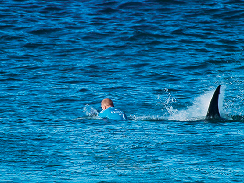 Surfer Escapes Great White