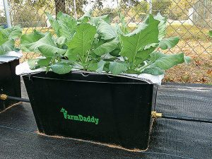 prepper products, preppers, disaster preparedness, disaster aftermath, FarmDaddy Self-Watering Garden Container