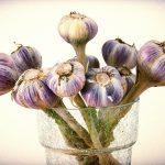 garlic, natural healer